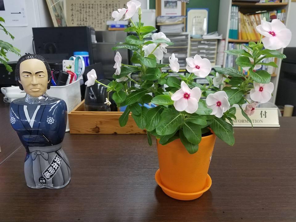福岡から朝一のJAL便で、高知市知寄町の高知県本部に戻ってきました。_c0186691_10470244.jpg