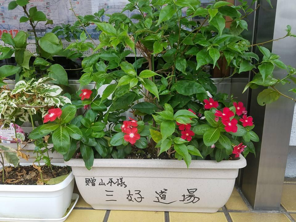 福岡から朝一のJAL便で、高知市知寄町の高知県本部に戻ってきました。_c0186691_10473262.jpg