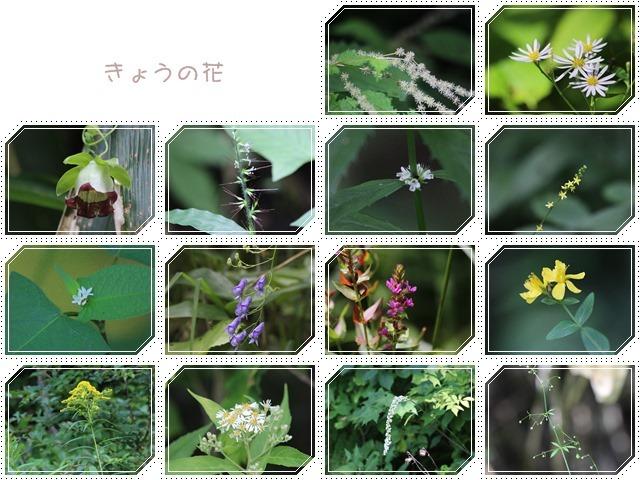 f0146493_20135416.jpg