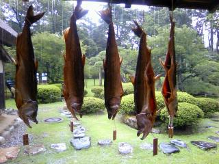 昨日から鮭の町、新潟・村上でした。_b0255217_14304072.jpg