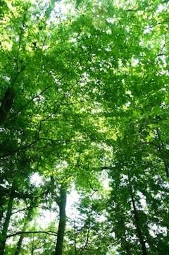 「昼間のすっきり感が違う。たまたまかもしれないけれど。」 〜瞑想CDを活用して、日々、少しずつ & 9月の瞑想イベント〜_f0043134_11031623.jpg