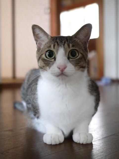 猫のお留守番 たんたんくん編。_a0143140_20175690.jpg