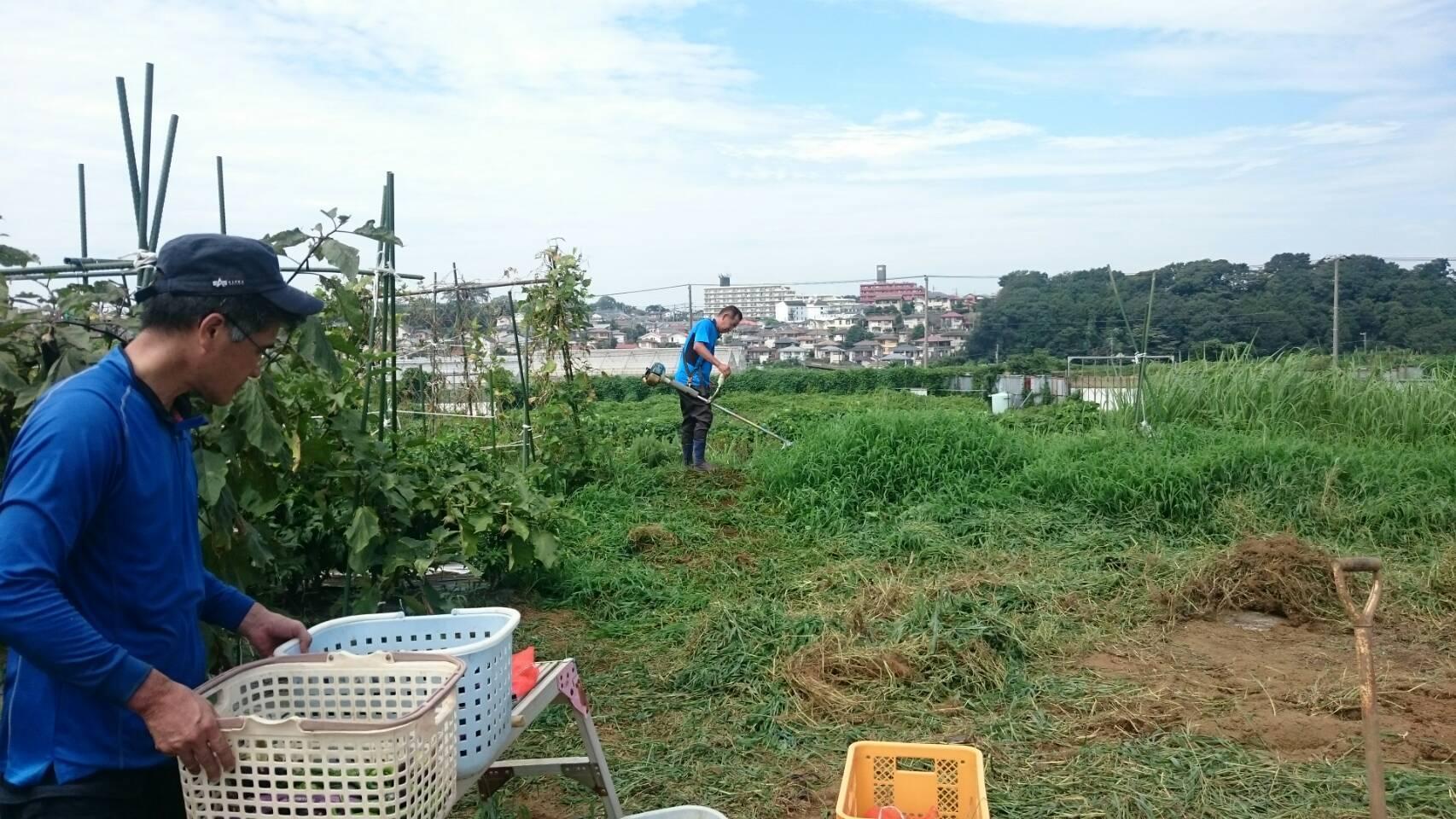 ズッキーニの畝跡 草刈り機2時間弱連続・・・くらくらしてきました 水分補給_c0222448_21141507.jpg