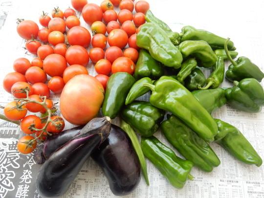 '17,8,24(木)ミニトマトとピーマンの収穫がすごい!_f0060461_08183615.jpg