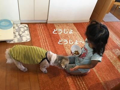小豆姫も来てました(;^ω^)_f0372998_22441144.jpg