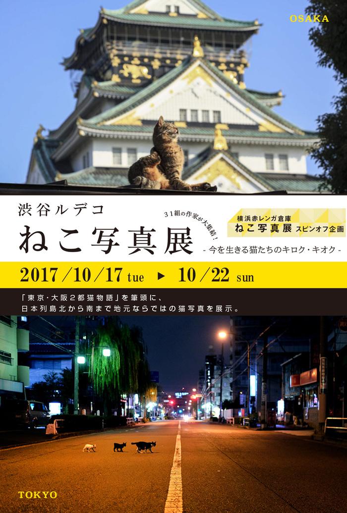 渋谷ルデコねこ写真展_c0194541_16402822.jpg