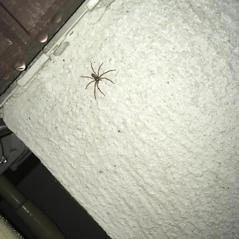 大嫌いな大型種の蜘蛛、再び😱_f0349583_12152374.jpg