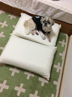小豆姫も来てました(;^ω^)_f0372998_20471841.jpg