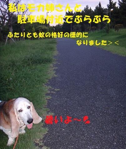 f0121712_14305530.jpg