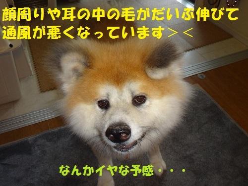 f0121712_15010291.jpg