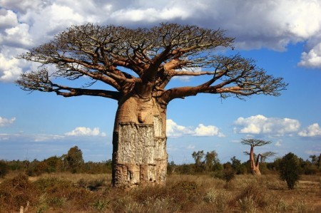 タンザニアの石鹸_c0079828_17355105.jpg