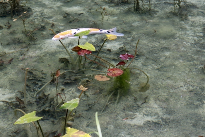 【名もなき池(モネの池)】夏の帰省 - 8 -_f0348831_08173774.jpg