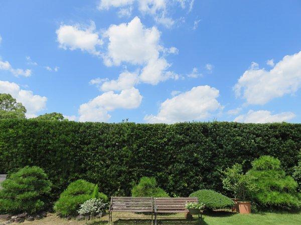 2017年8月31日 生垣の上の青い空と白い雲_b0341140_13484840.jpg