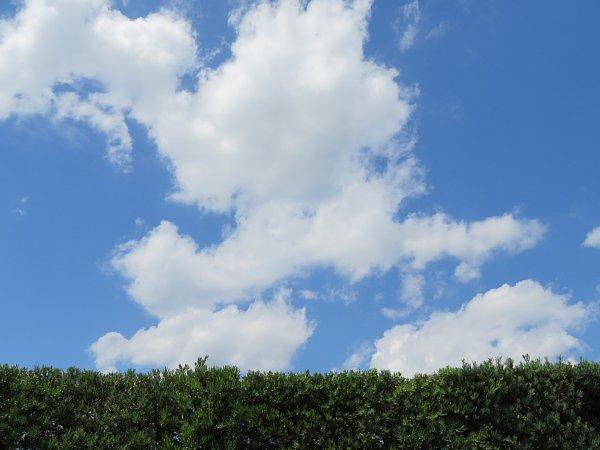 2017年8月31日 生垣の上の青い空と白い雲_b0341140_13492185.jpg