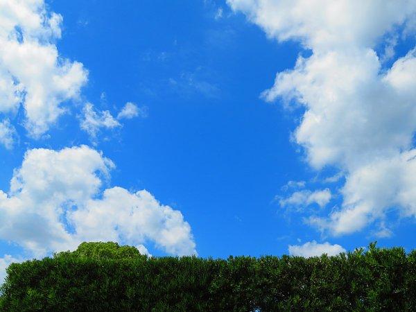 2017年8月31日 生垣の上の青い空と白い雲_b0341140_13494581.jpg