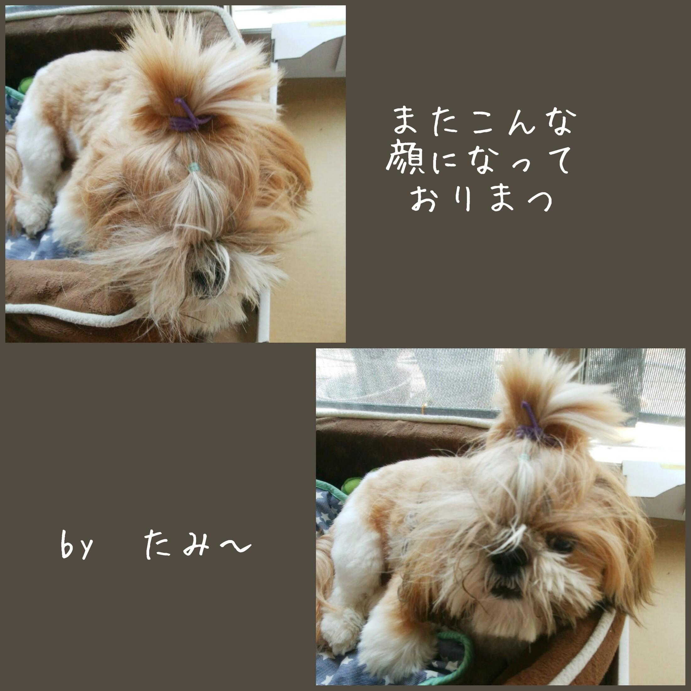 b0306158_10442302.jpg