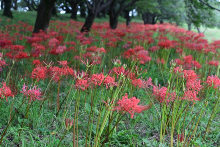 季節の花でも_f0202686_17352880.jpg
