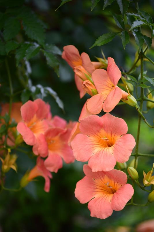 季節の花でも_f0202686_17361207.jpg