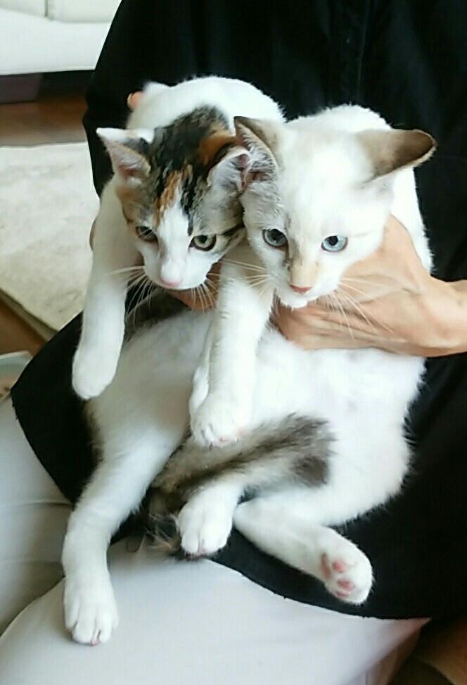招き猫が招いたのは本物猫だった…_f0255704_14552679.jpg