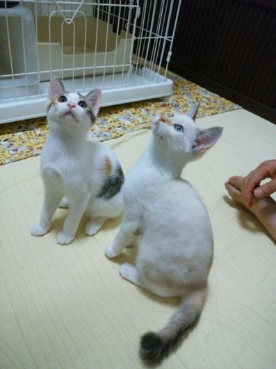 招き猫が招いたのは本物猫だった…_f0255704_14553188.jpg