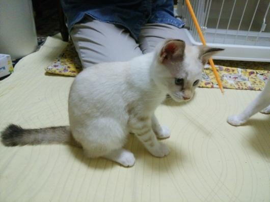 招き猫が招いたのは本物猫だった…_f0255704_14553463.jpg