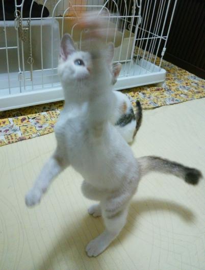 招き猫が招いたのは本物猫だった…_f0255704_14554017.jpg