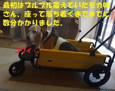 f0121712_15125840.jpg