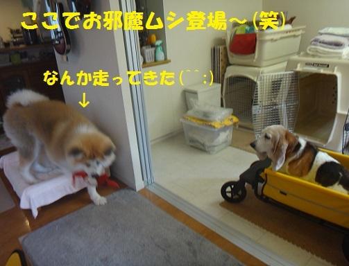 f0121712_15251585.jpg