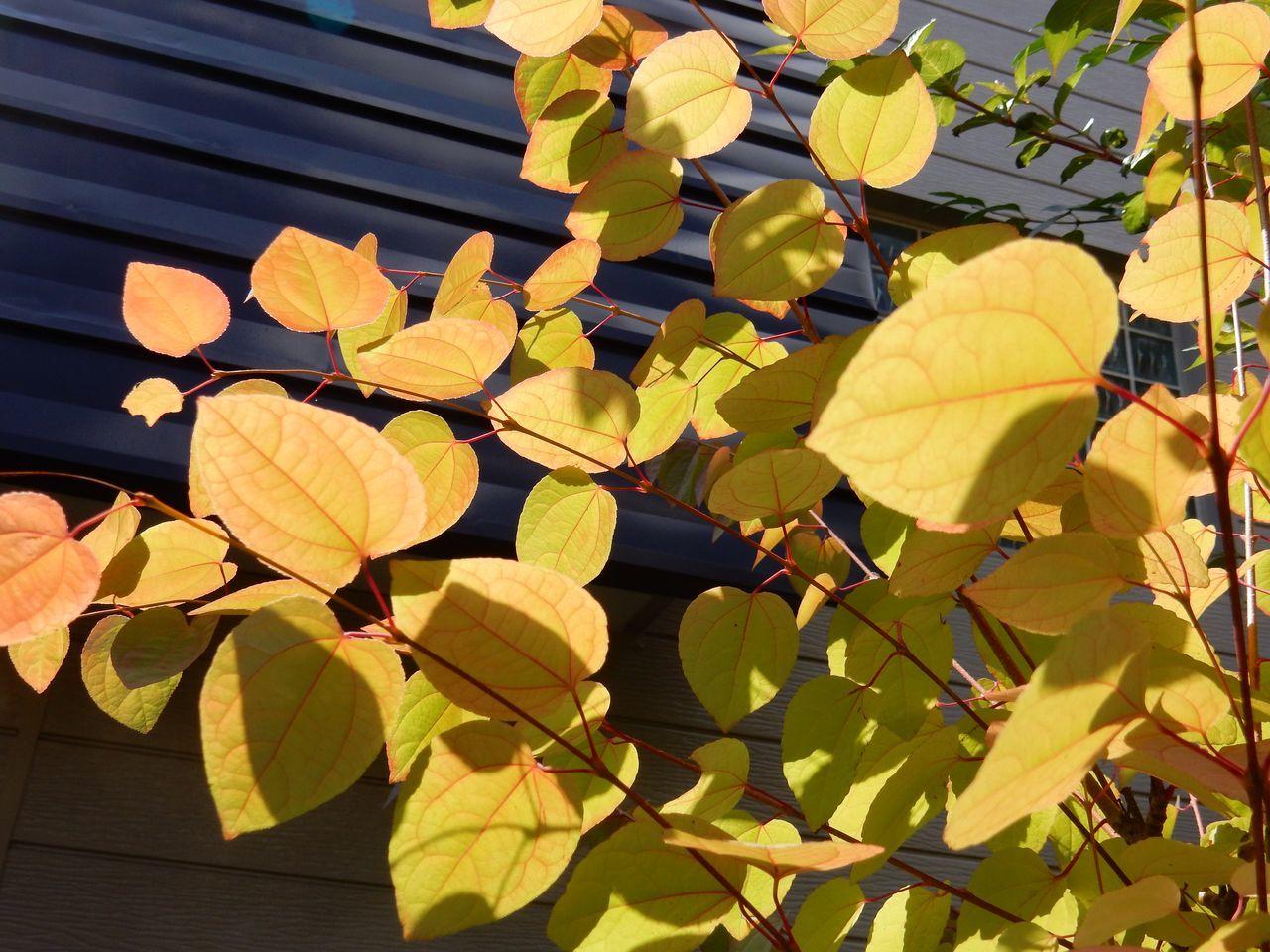 色が増える季節_c0025115_21063746.jpg