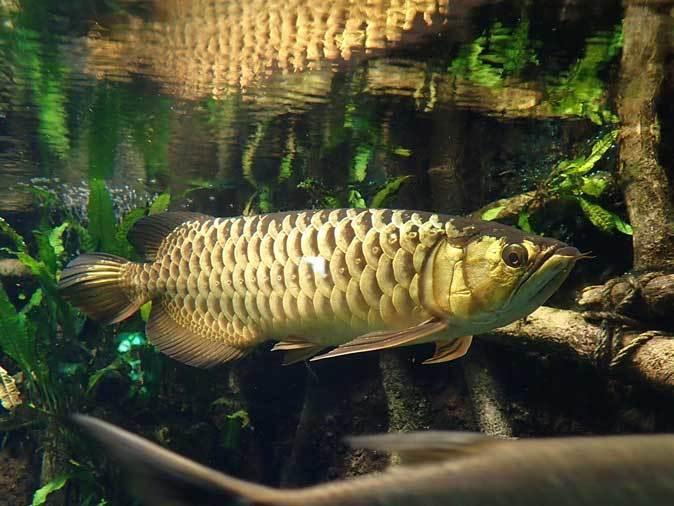 サンシャイン水族館~「東南アジアの水辺」、「タンガニーカ湖」_b0355317_11031597.jpg