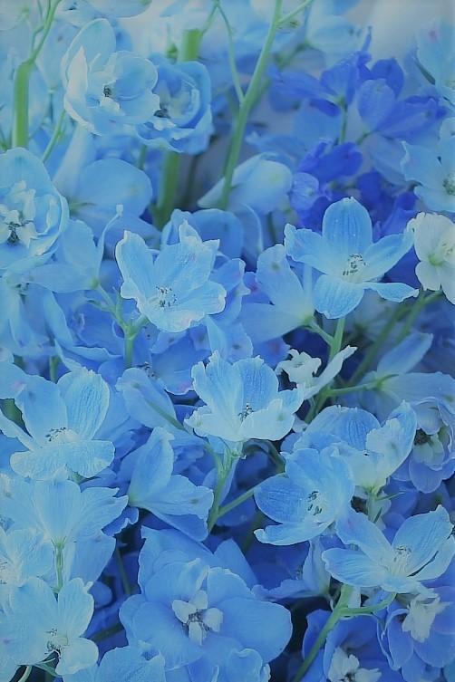 真夏のギフト だんなさまから奥様へ、人生で初めての花_a0042928_19554461.jpg
