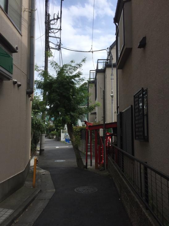 お稲荷さんと御神木_f0144003_15310932.jpg