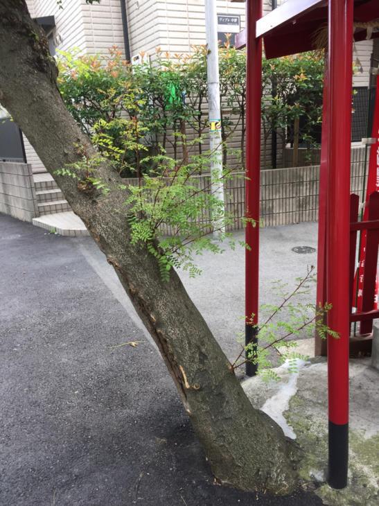 お稲荷さんと御神木_f0144003_15311081.jpg