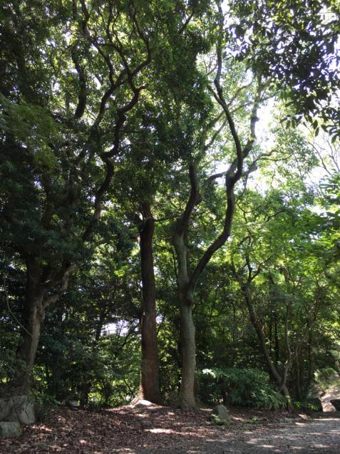 警固 赤坂散歩 警固ランチ 南インドカレー ゼリージュ_f0140145_09555697.jpg