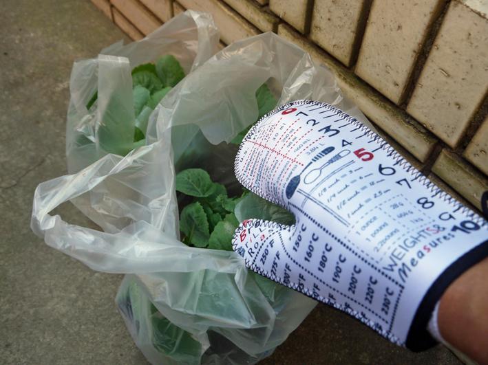 ダイコン種蒔き、秋ジャガ植え付け8・25~27右手薬指骨折②_c0014967_10325530.jpg