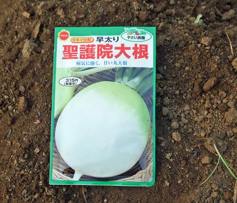 ダイコン種蒔き、秋ジャガ植え付け8・25~27右手薬指骨折②_c0014967_10334280.jpg