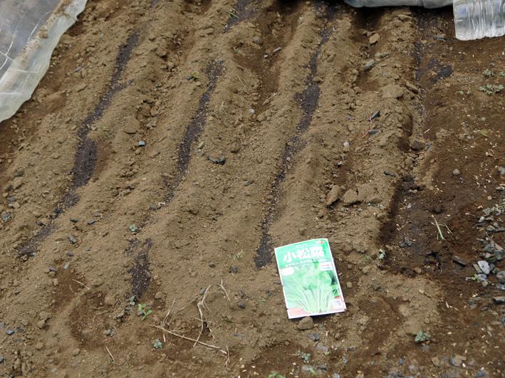 ダイコン種蒔き、秋ジャガ植え付け8・25~27右手薬指骨折②_c0014967_10381220.jpg