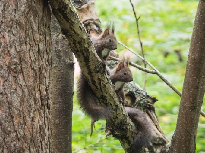 """この春生まれた2匹の""""こりすちゃん""""が遊びに来ています。_f0276498_23031933.jpg"""