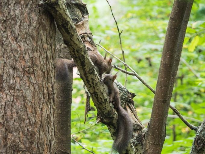 """この春生まれた2匹の""""こりすちゃん""""が遊びに来ています。_f0276498_23071501.jpg"""
