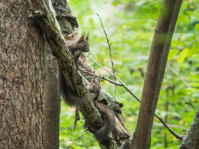 """この春生まれた2匹の""""こりすちゃん""""が遊びに来ています。_f0276498_23082572.jpg"""