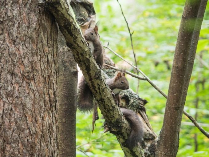 """この春生まれた2匹の""""こりすちゃん""""が遊びに来ています。_f0276498_23095795.jpg"""