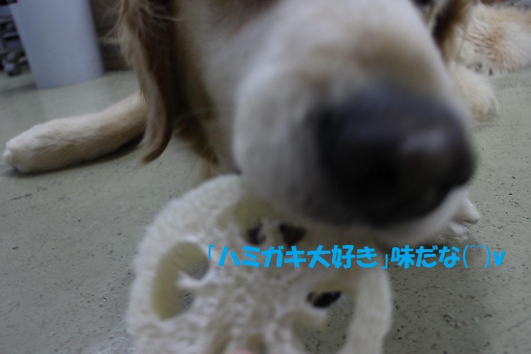 f0170713_15304840.jpg