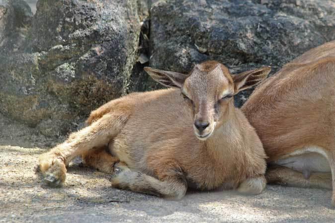 智光山公園こども動物園へ行って来ました♪_b0355317_22000415.jpg