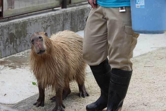 智光山公園こども動物園へ行って来ました♪_b0355317_22075747.jpg