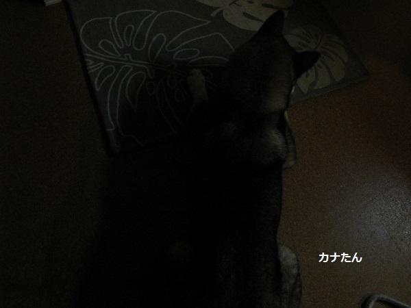 f0143123_08033174.jpg
