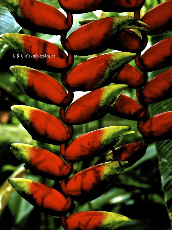 熱帯植物_f0315034_14470168.jpg