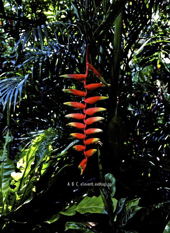 熱帯植物_f0315034_14473608.jpg