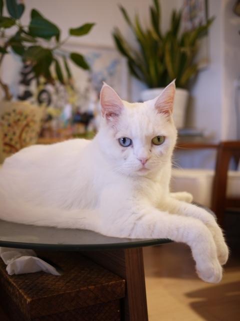 猫のお留守番 リュウちゃん編。_a0143140_22450218.jpg