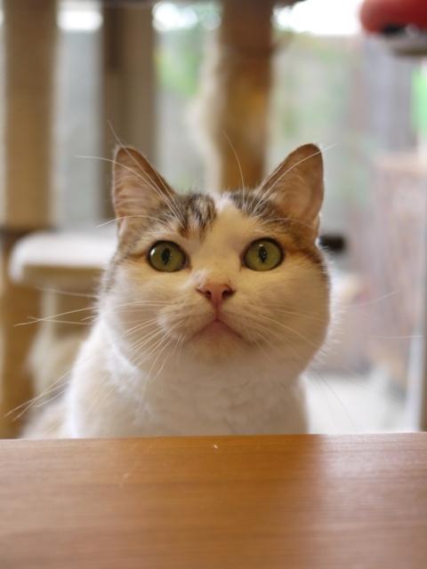 猫のお留守番 さくらちゃん編。_a0143140_22551189.jpg