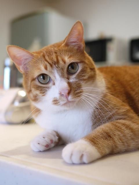 猫のお留守番 チャイくん編。_a0143140_22593950.jpg